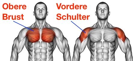 Foto der oberen Brustmuskeln und vorderen Schultermuskeln.