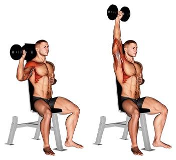 Foto von der Übung Schulterdrücken mit Kurzhanteln einarmig sitzend.