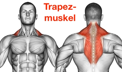 Foto von dem Trapezmuskel Musculus trapezius als Nackentraining Muskel.