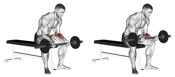 Unterarmmuskeln trainieren: Foto von der Übung Unterarm Curls Langhantel Untergriff.
