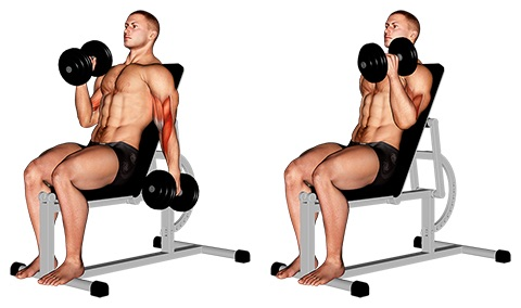 Unterarmtraining Kurzhantel: Foto von der Übung Hammercurls sitzend.