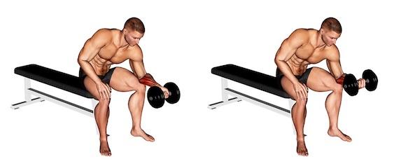Unterarmtraining Kurzhantel: Foto von der Übung Unterarm Curls Untergriff.