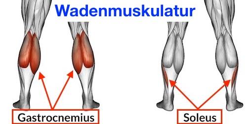 Foto von den Wadenmuskeln zum Wadenmuskulatur aufbauen.