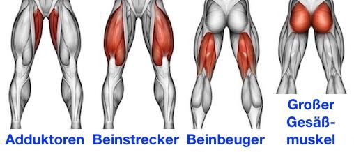 Foto von den Adduktoren, Beinstrecker, Beinbeuger und grosser Gesäßmuskel als Sumo Kniebeuge Muskeln.