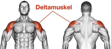 Foto von dem Deltamuskel Musculus deltoideus zum Schultermuskel aufbauen.