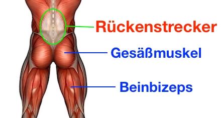 Foto von den Kreuzheben Muskeln: Rückenstrecker, Gesäßmuskel und Beinbizeps.