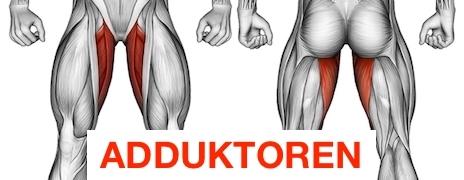 Foto von dem Oberschenkelinnenseite Muskel Adduktoren.