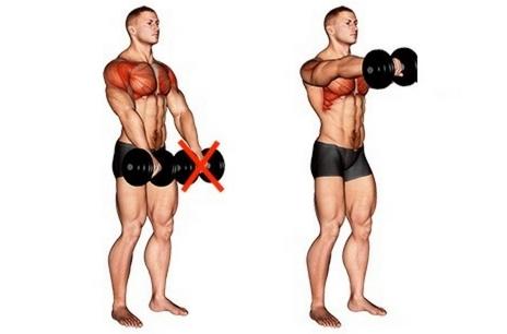 Schultermuskeln aufbauen: Foto von der Übung Kurzhantel Frontheben einarmig.