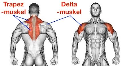 Foto vom Trapezmuskel und Deltamuskel als Butterfly Reverse Muskeln.