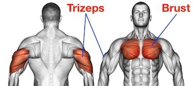 Foto von den Arnold Dips Muskelgruppen Trizeps und Brust.