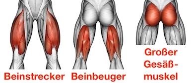 Foto von den Ausfallschritt Langhantel Muskeln Beinstrecker, Beinbeuger und großer Gesäßmuskel.