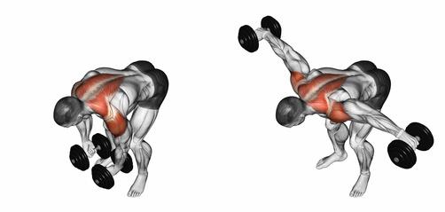 Hintere Schulter trainieren: Foto von der ÜbungSeitheben vorgebeugt mitKurzhanteln stehend.