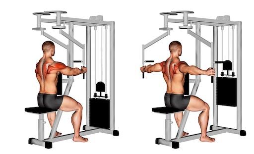 Hinterer Deltamuskel Übungen: Foto von der Übung Butterfly Reverse Maschine.