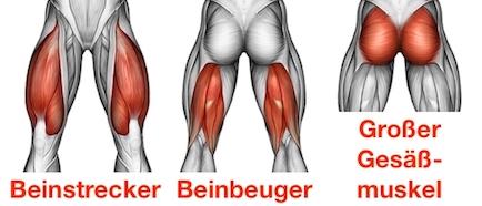 Foto von den Kniebeuge Muskeln Beinstrecker, Beinbeuger und großer Gesäßmuskel.