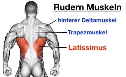 Foto von den Rudern Muskeln: Latissimus, Trapezmuskel und hinterer Deltamuskel.