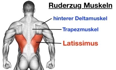 Foto von den Ruderzug Muskeln: Latissimus, Trapezmuskel und hinterer Deltamuskel.