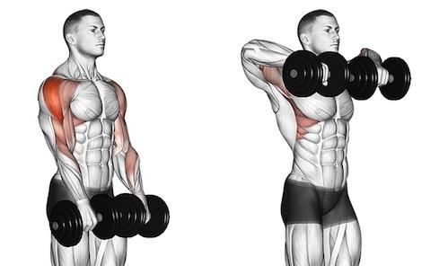 Seitliche Schulter trainieren:Foto von der Übung Aufrechtes Rudern mitKurzhanteln.
