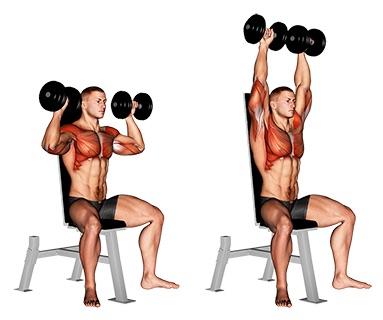 Seitliche Schulter Übungen: Foto von der Übung Schulterdrücken mitKurzhanteln sitzend.