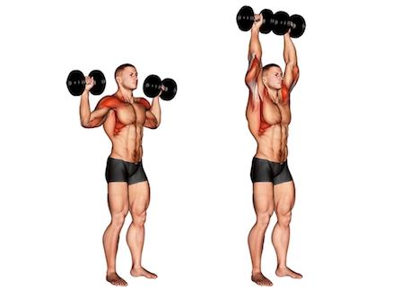 Seitliche Schulter Übungen: Foto von der Übung Schulterdrücken mitKurzhanteln stehend.