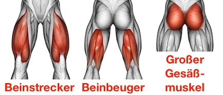 Foto von den Squats Muskeln Beinstrecker, Beinbeuger und großer Gesäßmuskel.