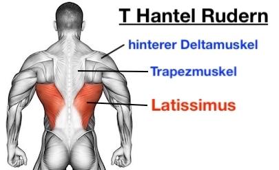 Foto von den T Hantel Rudern Muskeln: Latissimus, Trapezmuskel und hinterer Deltamuskel.