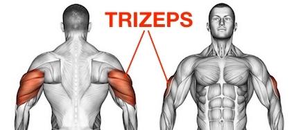 Foto vom Trizeps trainieren Armstrecker Muskel namens Musculus triceps brachii.