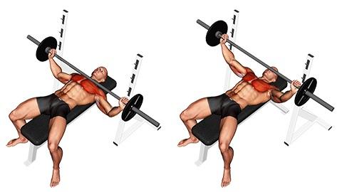 Bankdrücken Muskelgruppen: Foto von der Übung breites Bankdrücken mitLanghantel.