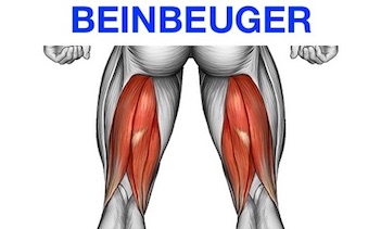 Foto von dem Beinbeuger Muskel namens Musculus biceps femoris.
