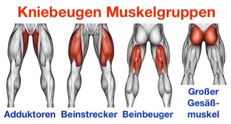 Foto von den Kniebeugen Muskelgruppen: Adduktoren, Beinstrecker, Beinbeuger und großer Gesäßmuskel.