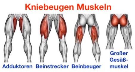 Foto von den Kniebeugen Muskeln: Adduktoren, Beinstrecker, Beinbeuger und großer Gesäßmuskel.