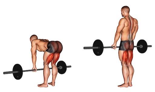 Kreuzheben Muskelgruppen: Foto von der ÜbungGestrecktesKreuzheben mitLanghantel.