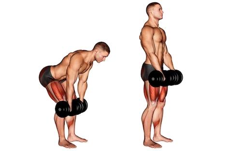 Kreuzheben Muskelgruppen: Foto von der ÜbungRumänischesKreuzheben mitKurzhanteln.