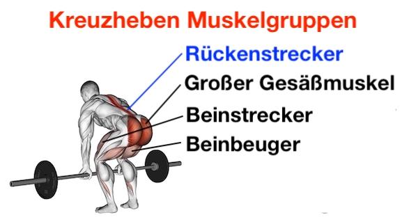 Foto von den Kreuzheben Muskelgruppen.