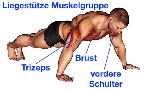 Liegestütze Muskelgruppe: Foto von deN Muskeln Brust, Trizeps und vordere Schulter.