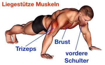 Foto von den Liegestütze Muskeln Brust, Trizeps und vordere Schulter.