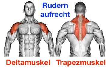 Foto von den Rudern aufrecht Muskeln Deltamuskel und Trapezmuskel.