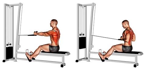 Rudern Muskelgruppen: Foto von der Übung Rudern amKabelzug enger Griff.