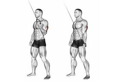 Trizeps trainieren: Foto von der Übung Trizepsdrücken am Kabelzug einarmig.