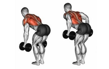 Welche Muskeln werden beim Rudern trainiert? Foto von der Übung Rudern mitKurzhanteln.