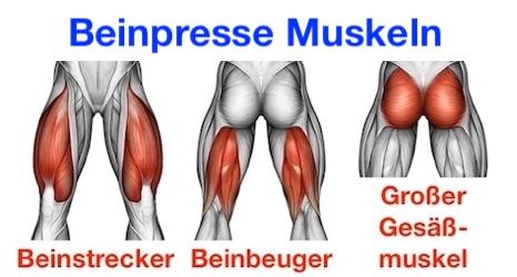 Foto von den Beinpresse Muskeln.