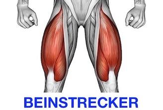 Foto von dem Beinstrecker Muskel namens Musculus quadriceps femoris.