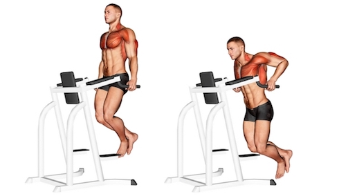 Dips Muskelgruppen: Foto von der Übung Trizeps Dips am Gerät.