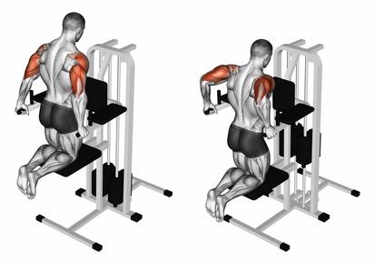 Dips Muskelgruppen: Foto von der Übung Trizeps Dips kniend am Gerät.