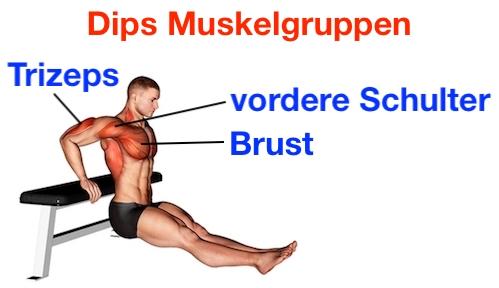 Foto von den Dips Muskelgruppen.