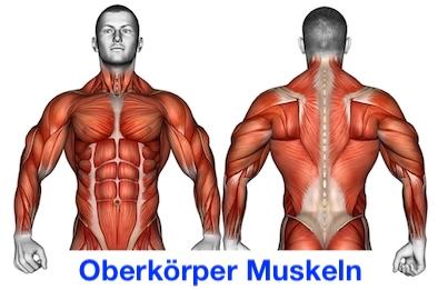 Foto von den Oberkörper Muskeln.
