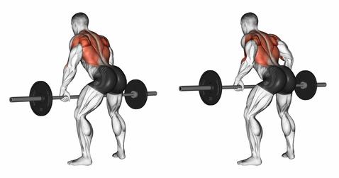 Rudern Muskeln: Foto von der Übung Langhantel Rudern Obergriff.