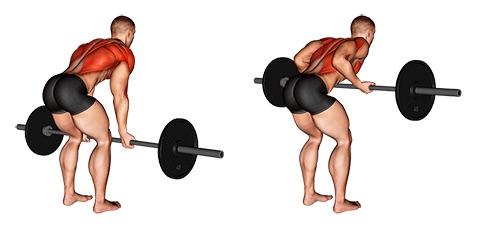 Rudern Muskeln: Foto von der Übung Langhantel Rudern Untergriff.