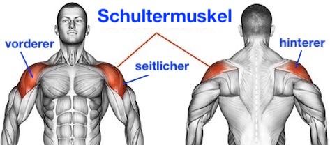 Schultermuskel trainieren: Vorderer, seitlicher und hinterer Schultermuskel.