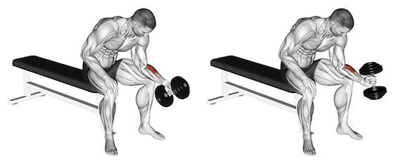 Training Unterarme:Foto von der Übung Unterarm CurlsKurzhantel Hammergriff.
