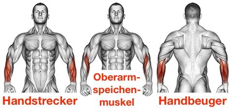 Foto von den Unterarme Muskeln Handstrecker, Oberarmspeichenmuskel und Handbeuger.
